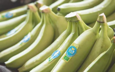 La banane SCB, bien plus qu'un fruit savoureux