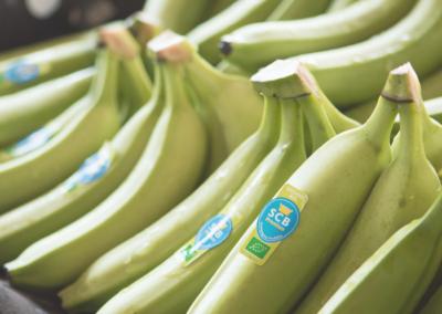 El plátano SCB, mucho más que una fruta sabrosa