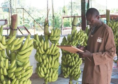 La delicadeza del plátano