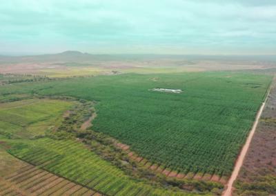 Growing organic bananas in Latin America